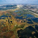 Nature takes back the city in Bucharest