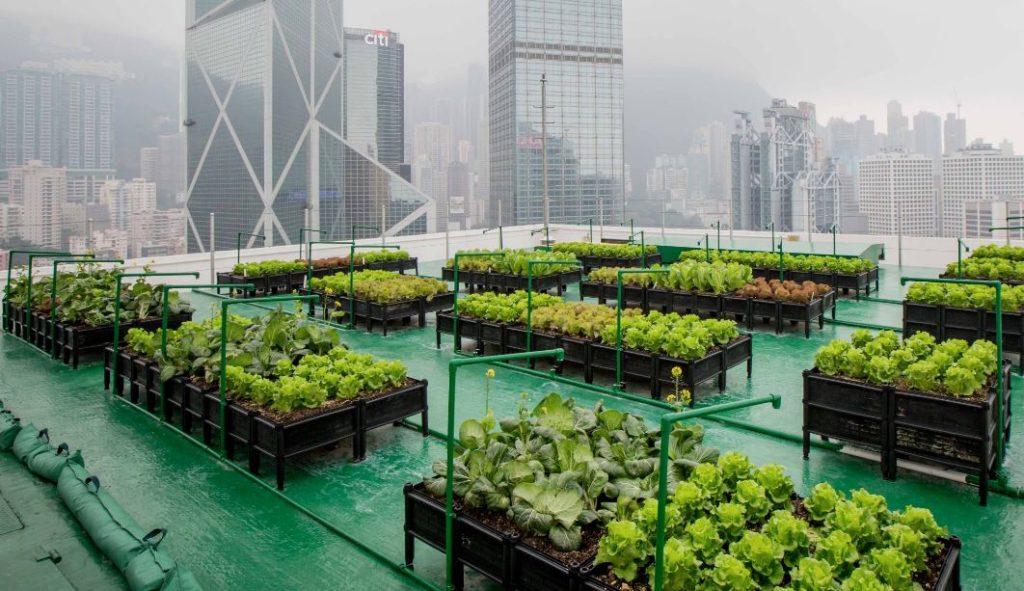 urban farming urbanizehub rooftop garden city skyscrapers