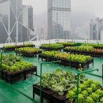 Urban farming and soft mobility: transforming cities